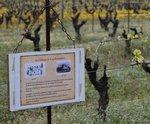 Baladez-vous à travers les vignes et découvrez lhistoire du vignoble de Nantes et de ce château au passé prestigieux. Les methodes de vinification et lelaboration du muscadet naura plus aucun secret pour vous.