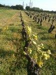 Nous produisons des vins blancs de qualité, des muscadets surprenants, des vins qui racontent une histoire, du rosé, des pétillants, des jus de raisin sans alcool.