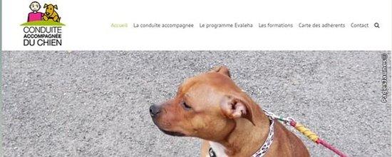 Le site web de Conduite Accompagnée du Chien